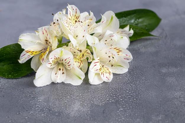 Букет диких орхидей на светлом фоне украшен лентами. день матери, женский день, день святого валентина или день рождения. банер. скопируйте пространство.