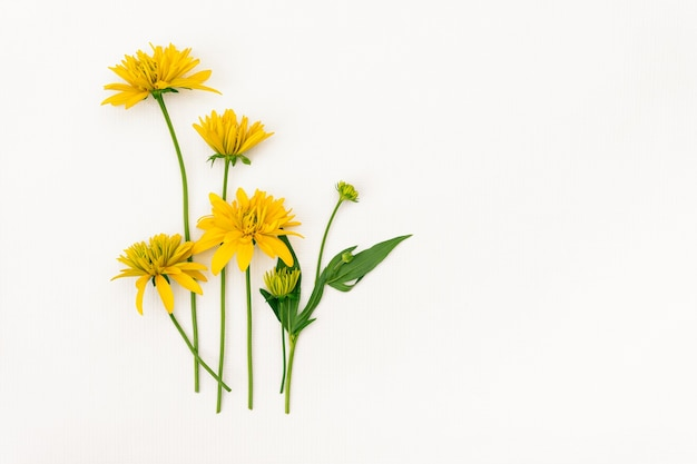 디자인을 위한 장소가 있는 흰색 배경에 노란색 꽃 꽃다발.
