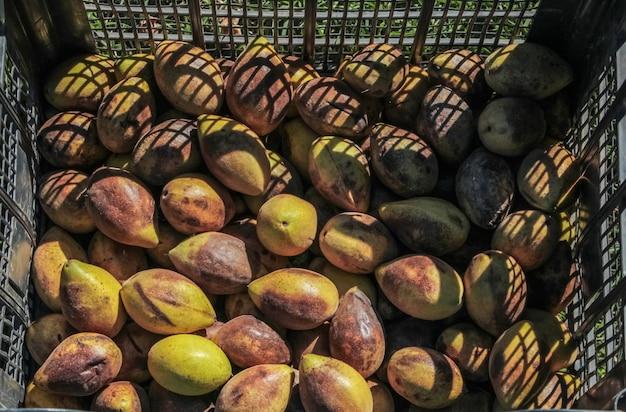 Ящик маньчжурских орехов, собранных с земли в зеленой скорлупе