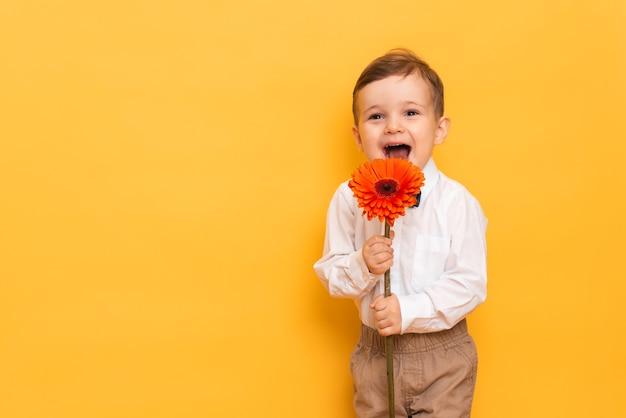 Мальчик в белой рубашке, брюках и галстуке-бабочке на желтой стене держит в руках цветок герберы.