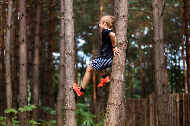 숲 속의 소년은 두 소나무 사이의 나무로 올라갔다