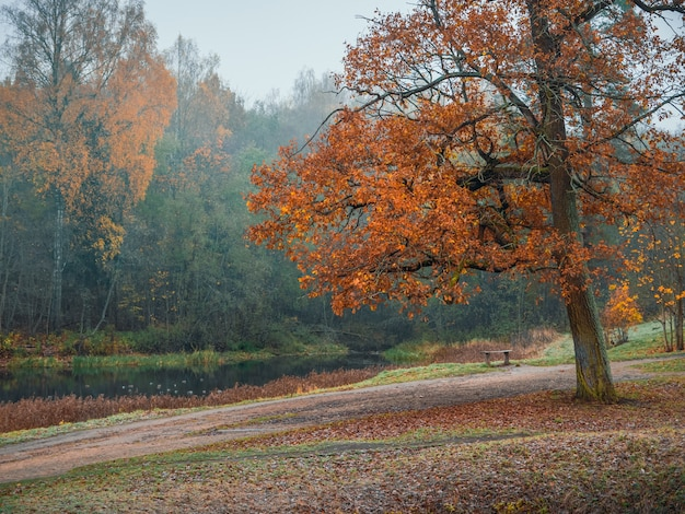 Ветка красного дуба на фоне осеннего озера. естественный туманный осенний пейзаж. мягкий фокус.