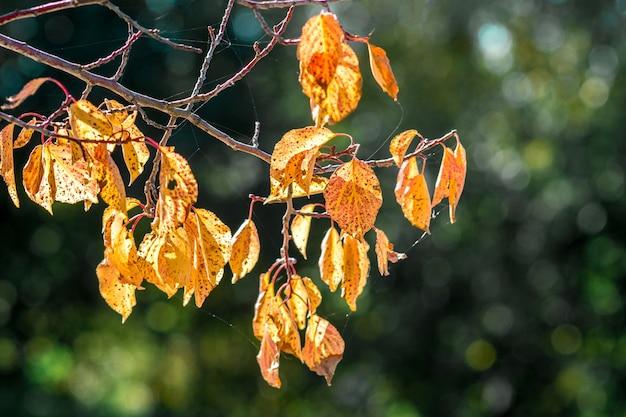 濃い緑色にオレンジ色の紅葉の木の枝