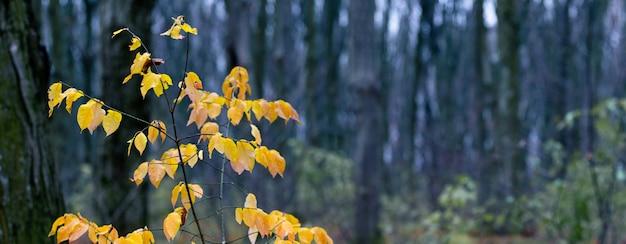 暗い秋の森に黄色の葉を持つ木の枝