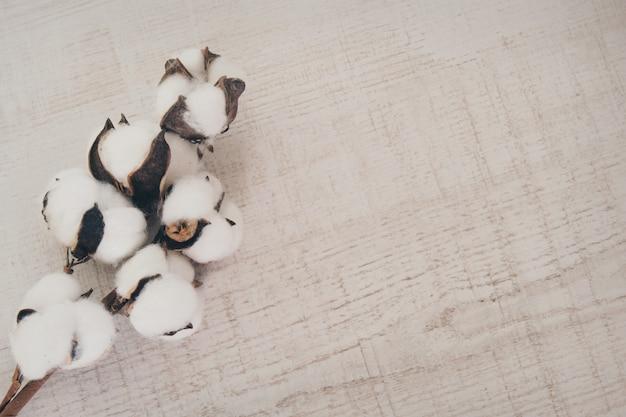 綿の枝。咲く植物。天然素材の洋服を縫う素材。白い背景の上のコピースペース
