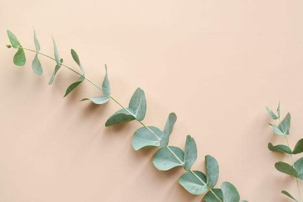 ベージュの背景にユーカリの枝。ミニマリズム。エコ化粧品。フラットレイ、上面図、コピースペース。