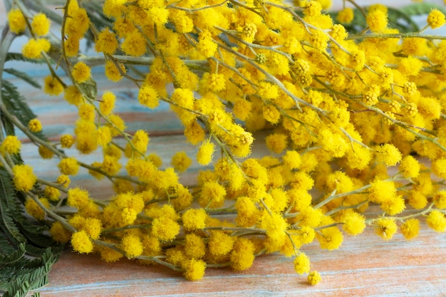ふわふわの繊細な花が咲き乱れるミモザの枝。黄色のミモザの木の背景。春休みと花飾りのコンセプト。