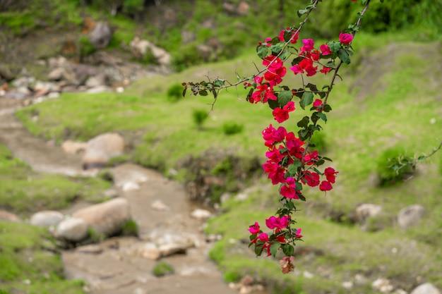 赤い咲く山の花の枝。山の川と緑の丘の風景です。