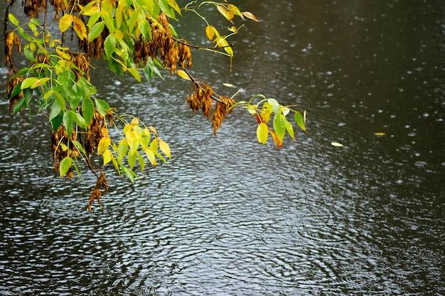 雨の間に川の暗い水の上に黄色と緑の葉を持つ枝