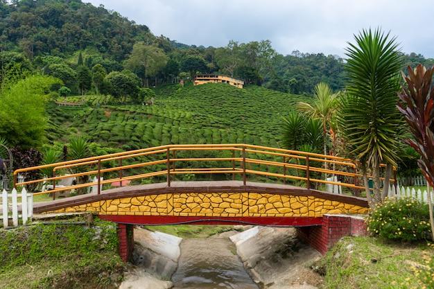 Мост через горную реку в чайную долину камерон. красота дикой природы в малайзии.
