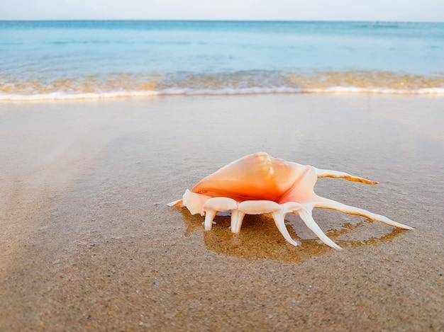 Яркая большая ракушка на песке на фоне синего моря