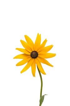 Яркий желто-оранжевый цветок на белом фоне.