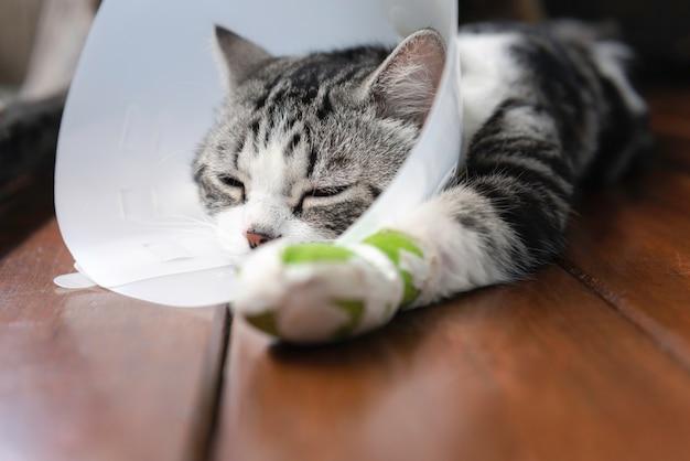 다리 부목을 핥는 것을 보호하기 위해 엘리자베스 칼라를 입은 부러진 다리 고양이