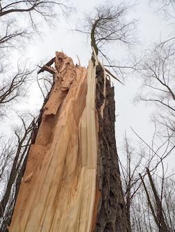 明るい空を背景に壊れた木