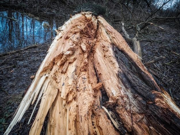 森の中の壊れた木。嵐の風の影響。気候変動の概念。