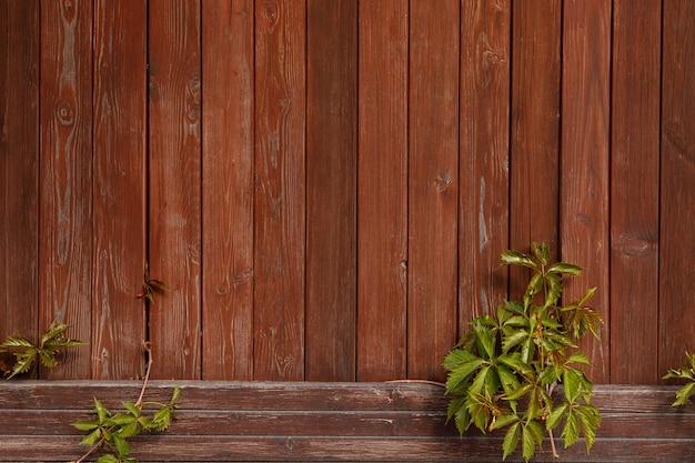 갈색 판자 울타리와 등반 식물. 빈티지 디자인을 위한 천연 나무 배경입니다. 복사 공간