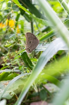 정글의 녹색 잎에 앉아 몸에 검은 점이 있는 갈색 나비