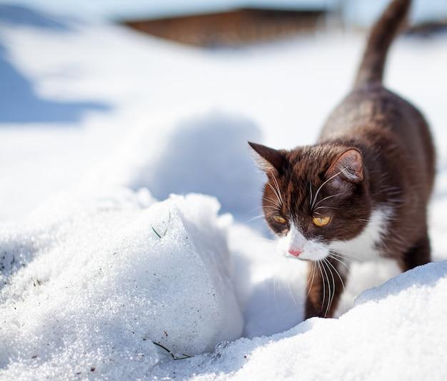 겨울에 눈 더미를 통과하는 갈색 솜털 고양이 프리미엄 사진