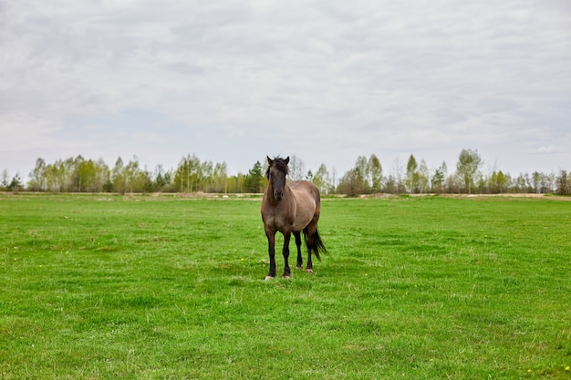 Коричневая лошадь с косматой коричневой гривой стоит на пустом травяном поле