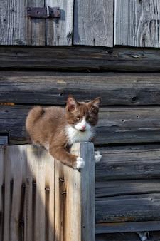通りにある木造家屋の木製ドアに茶色の子猫が座っています。ブシアという子猫。子猫が遊んでいます