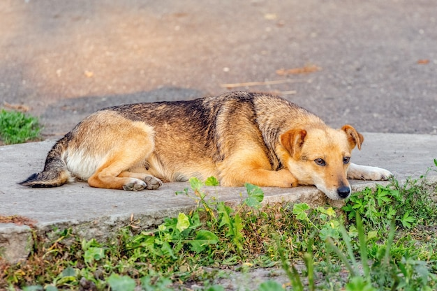 緑に囲まれた歩道に茶色の小さな犬が横たわっています_