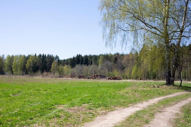 На земле лежат бревна коричневого цвета, брус, ложа, ствол, распиленный в летнем поле на фоне леса. вырубка леса