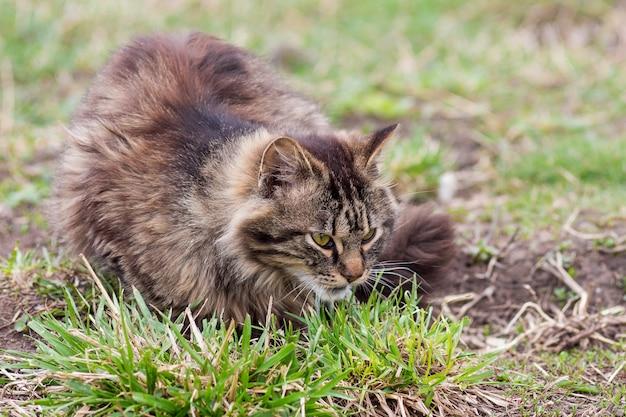 Коричневая полосатая кошка лежит в саду на траве