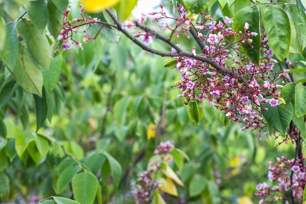 선별적인 초점을 가진 나뭇가지에 카람볼라 또는 스타프루트 꽃과 어린 과일 다발