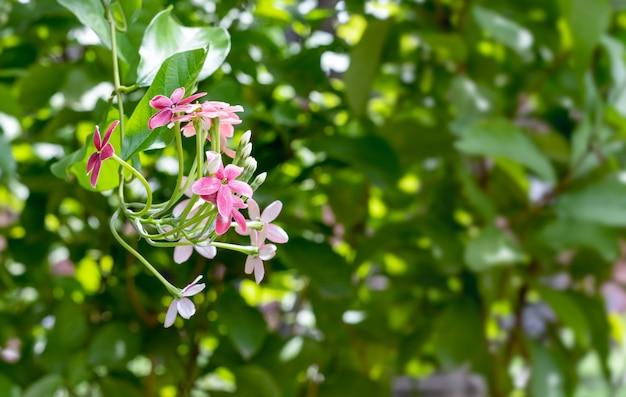 庭の枝に飾られた花の束