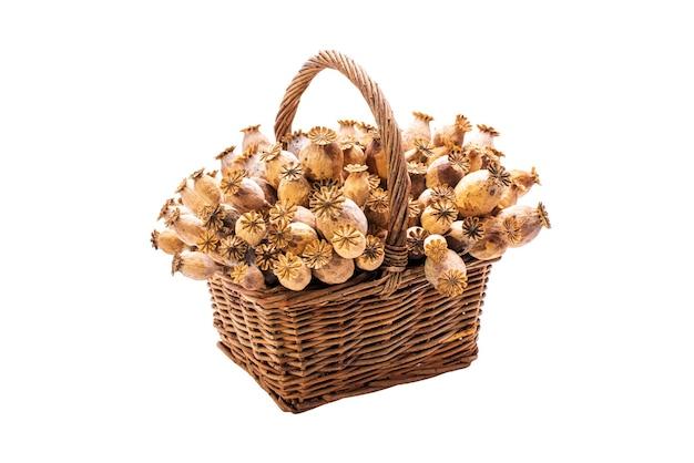 白い背景で隔離の籐のバスケットに乾燥ポピーの花の種子のポッドの束。