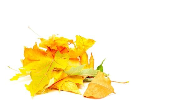 Пучок сухих кленовых листьев, изолированные на белом фоне