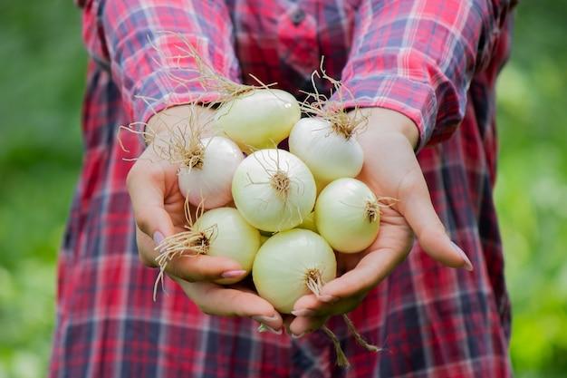 여자의 손에 신선한 양파의 무리. 농장에서 수확. 자연. 선택적 초점
