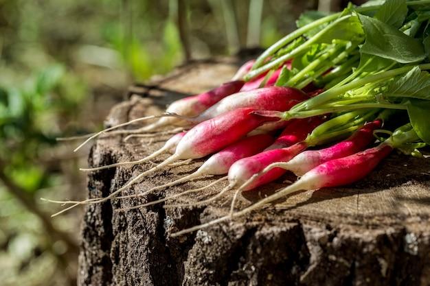 木の切り株に新鮮な大根の束