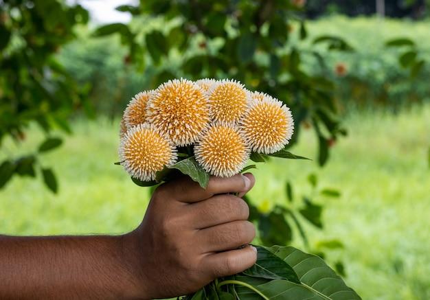 손에 라이히하르트 소나무나 카담 꽃 다발이 가까이 있다