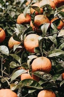 Букет апельсинов весной на дереве с красочными тонами