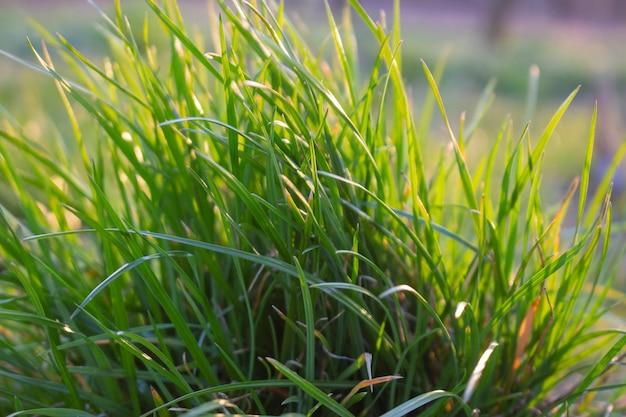 깔끔하지 못한 잔디밭에 풀 덤불