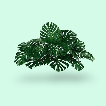 밝은 녹색 배경과 태양 여름 열대 콘체의 그림자가 있는 녹색 잎 덤불
