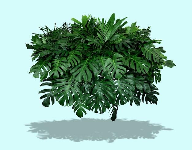 밝은 녹색 배경과 태양 여름 열대 개념의 그림자가 있는 녹색 잎 덤불