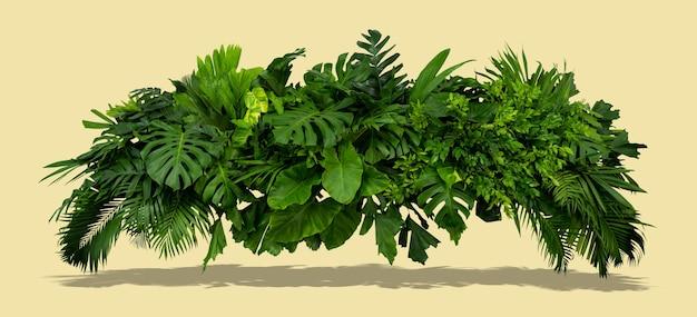 밝은 회색 배경과 태양 여름 열대 개념의 그림자가 있는 녹색 잎 덤불