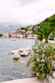 푸른 물 근처와 주택과 하늘의 흐린 배경에 대한 의욕적 인 배의 부시