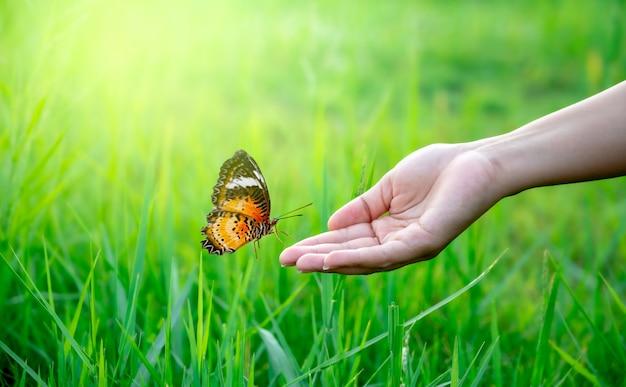 緑豊かな草原で女性の手に蝶が飛んでいます。