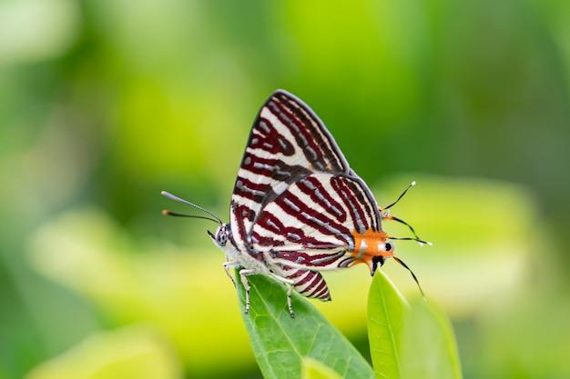 Бабочка сидела на листе
