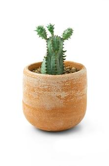 흰색 바탕에 테라코타 냄비에 선인장 식물.