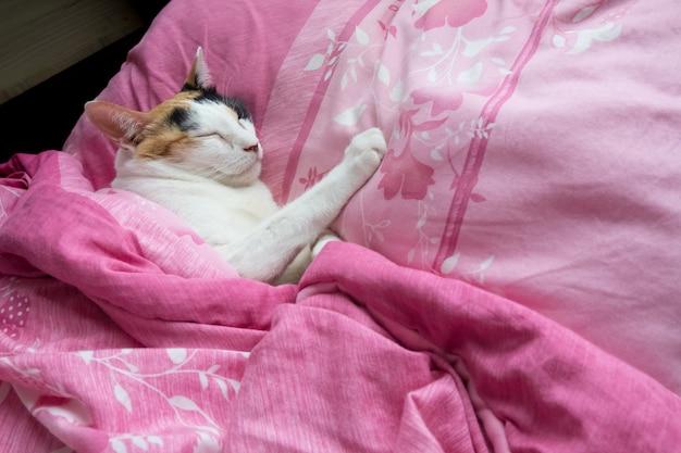 Ситцевая кошка накрыла одеяло и удобно спала на кровати.