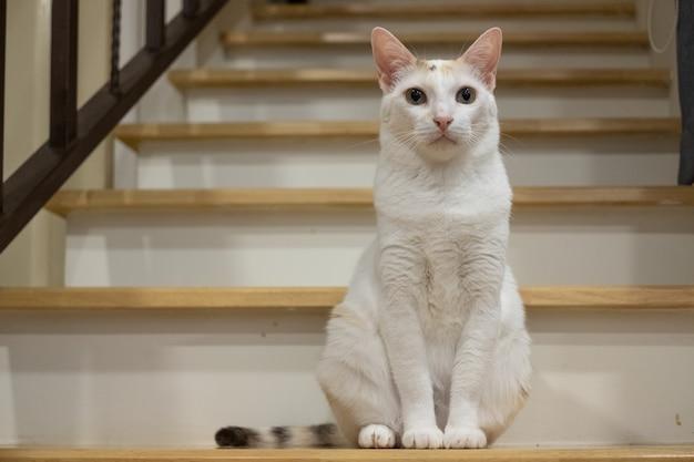 三毛猫が階段に座って何かを待っている