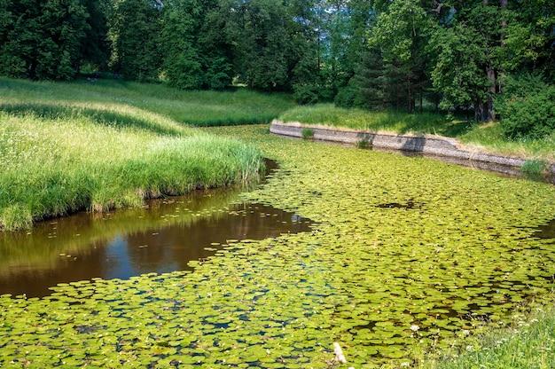 녹음이 우거진 아름다운 환경에 수련이 무성한 잔잔한 숲속의 강. 강과 수련이 있는 여름 자연 토지. 공원에 호수나 강이 있는 봄 자연 풍경