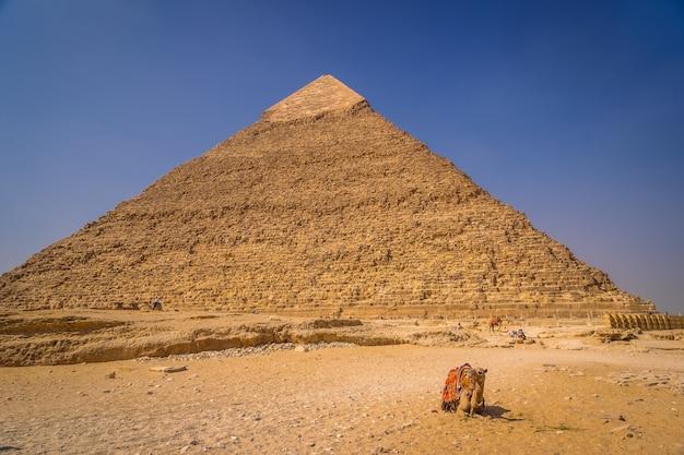カフラー王のピラミッドに座っているラクダ。ギザのピラミッドは、世界最古の葬式の記念碑です。エジプト、カイロ市