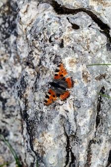 바위에 위장된 검은색과 주황색 나비