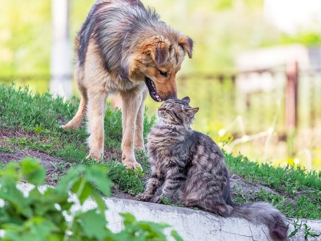 夏の緑の芝生の横にいる猫と犬。猫と犬は友達です