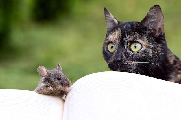 開いた本の近くにいる猫とネズミ、ネズミを見ている猫。本を読んでいる